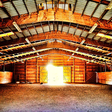 Morning Star Equestrian Center Family Owned Horse